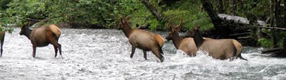 elk-crossing-header2