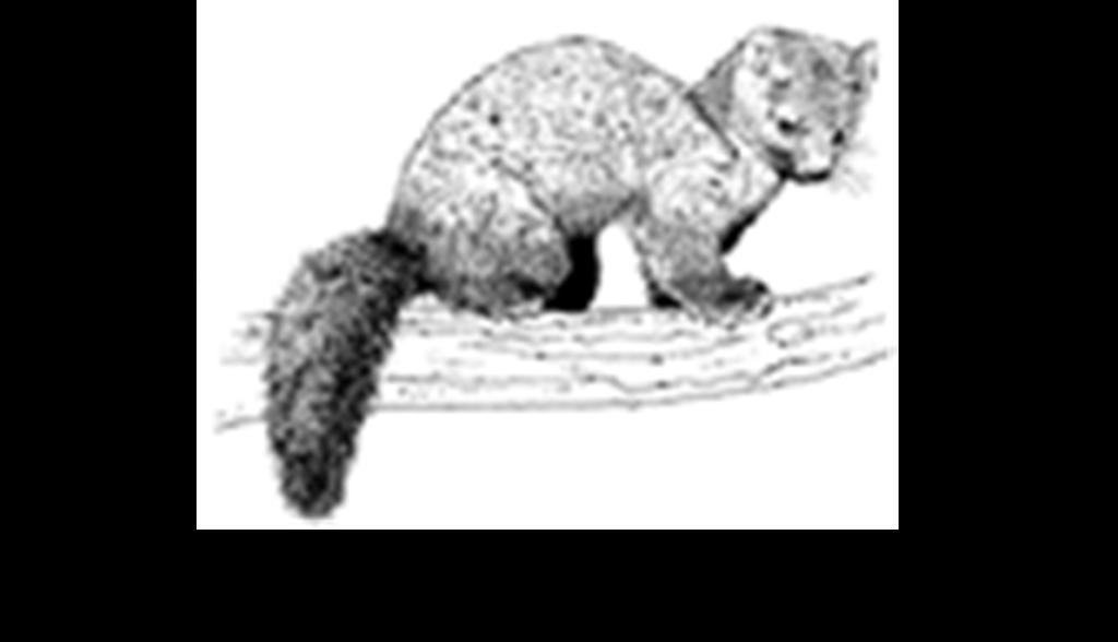 cncc-marten-logo-w-name
