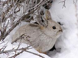 rabbit-250