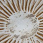 spores-header2